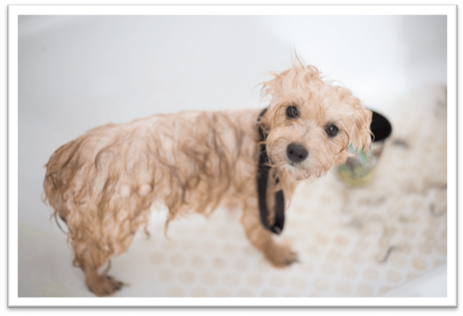 great smelling puppy shampoo