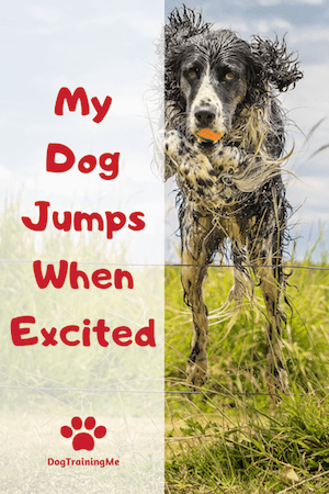 dog jumping when excited