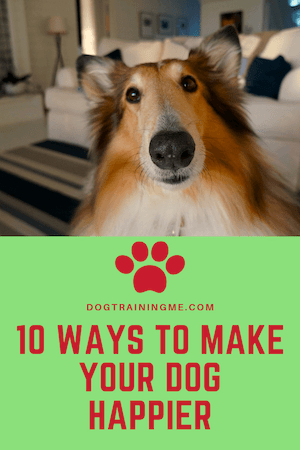 ways to make your dog happier