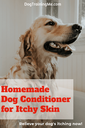 homemade dog conditioner