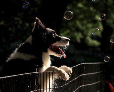 dog jumping fence
