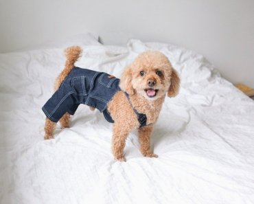denim jackets for dogs