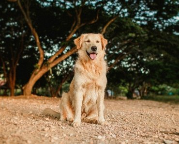 easiest dog breed to own