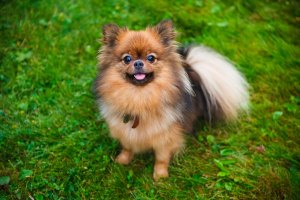 dogtrix-grooming