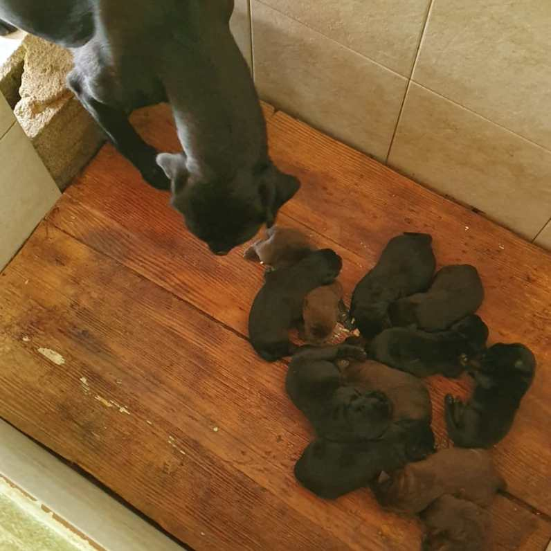 cuccioli nuovi nati by Dogvillage Cunardo_8