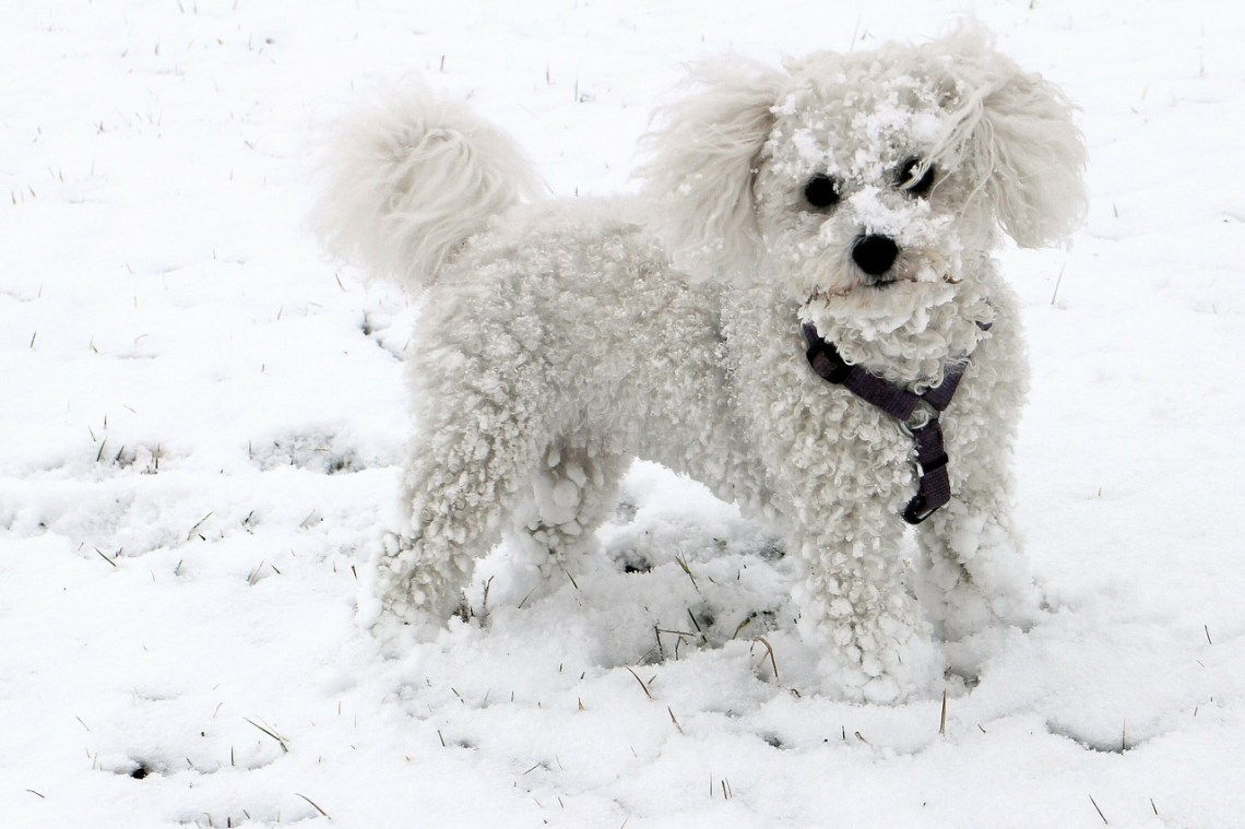 Image Result For Best Dogs For Families With Allergies