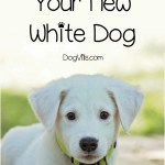 15 Perfect White Dog Names For Your New Puppy