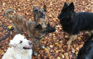 groups of 5 dogs