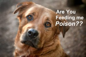 chemical-preservatives-in-commercial-dog-food