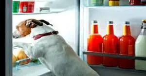 homemade dog foods