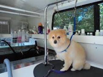 How To Chose The Best Mobile Groomers