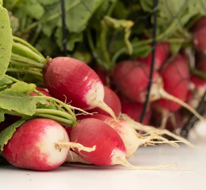 Radishes are easy to start from seed