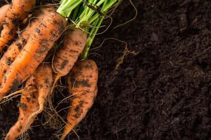 Easy to grow vegetables in the garden