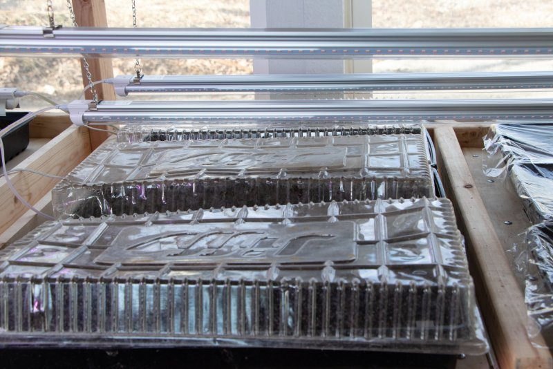Starting vegetable seedlings in the greenhouse