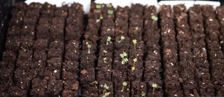 Mini soil blocks
