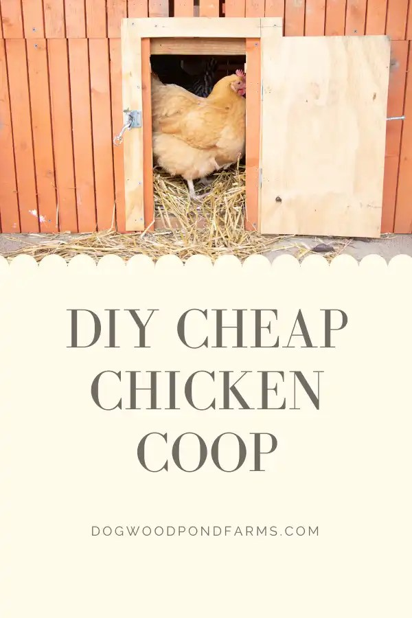 DIY Cheap Chicken Coop