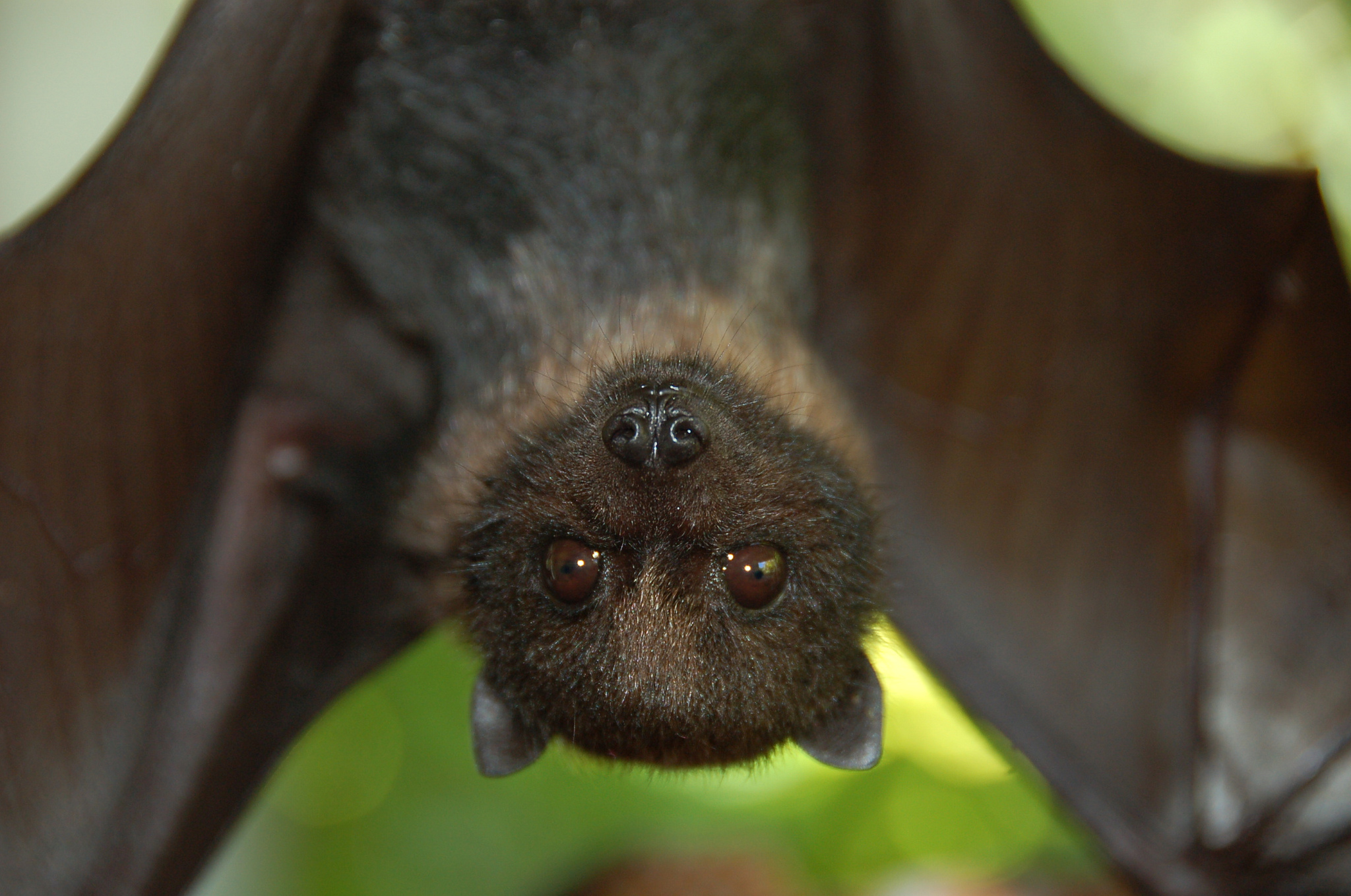 13 Awesome Facts About Bats