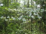 Poems for Spring by Gerard Manley Hopkins and Amy Lowell