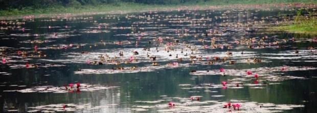 Jahangir Nagar Univ, Savar-Migratory Birds (21)
