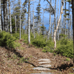 Stone path, East Coast Trail