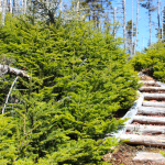 Wooden Staircase, Mickeleens Path, East Coast Trail