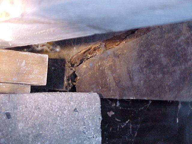 Ant Home Carpenter Infestation