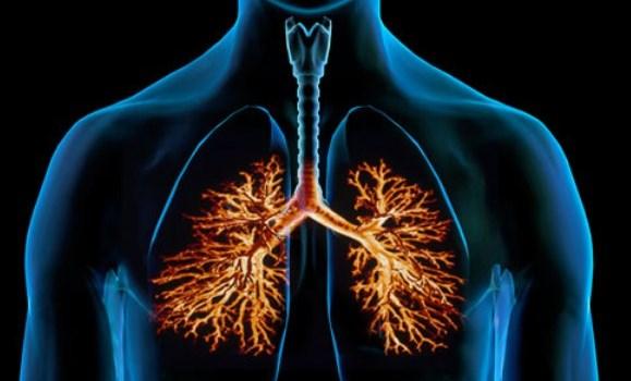 Tips dan Cara Mudah Menjaga Kesehatan Paru-paru