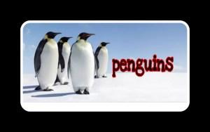 बर्फ़ का विचित्र प्राणी, पेंग्विंग   Interesting Facts About Penguins