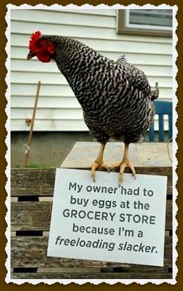 slacker-chicken