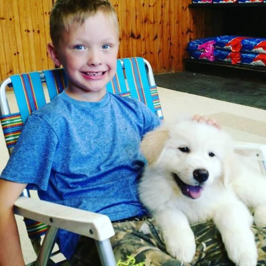 Zeus as a puppy