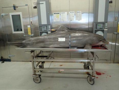Dolphin arrow