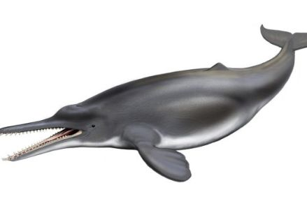 A new understanding of dolphin and whale evolution