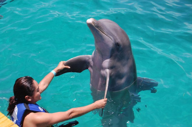 Image result for dolphin