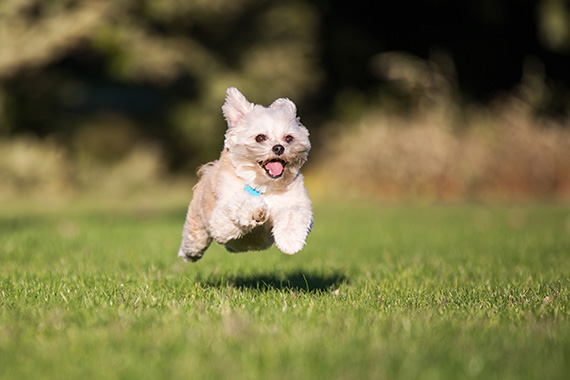 balade chien