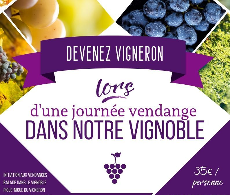 Initiation aux vendanges