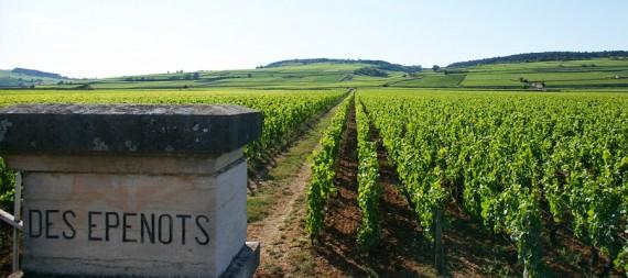 Виноградник Les Epenots, Domaine de Courcel