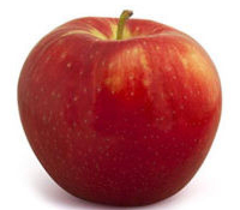 Pomme Honneycrisp