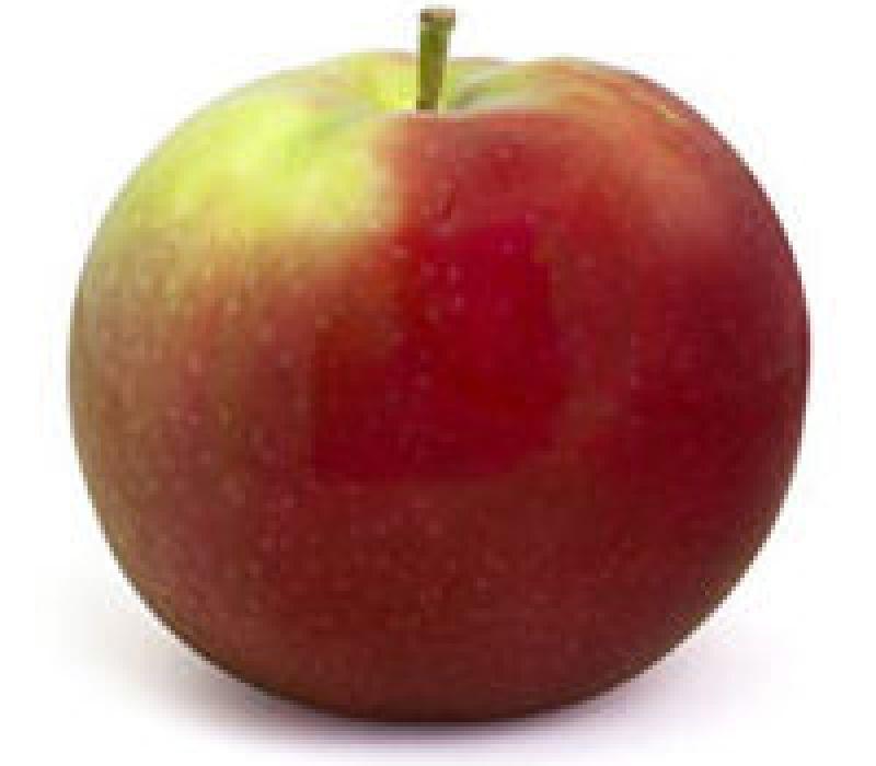 Pomme Mcintosh