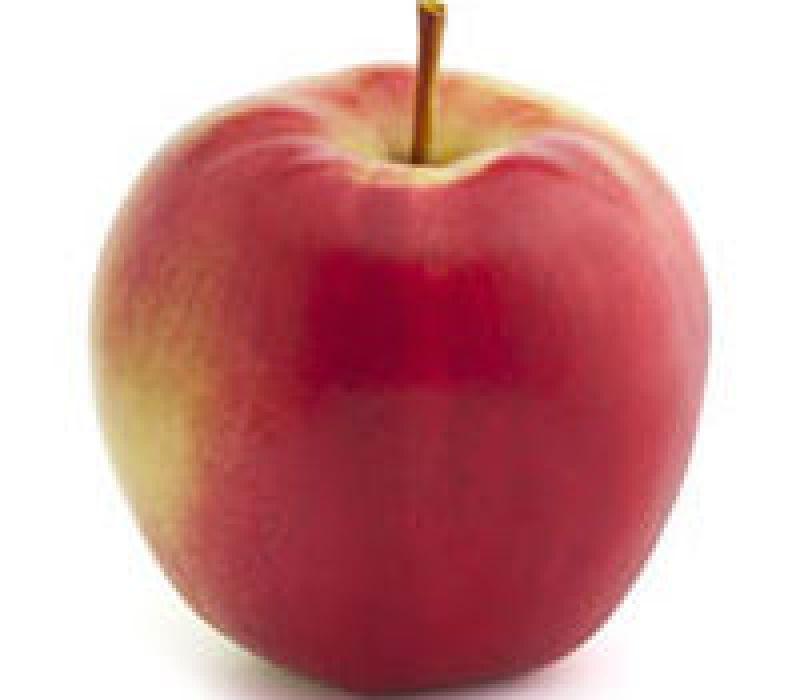 Sunrise Apple