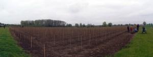 Aanplant wijngaard Domein Laagland