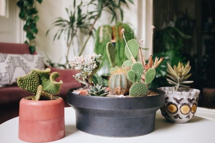 kaktusi odrzavanje