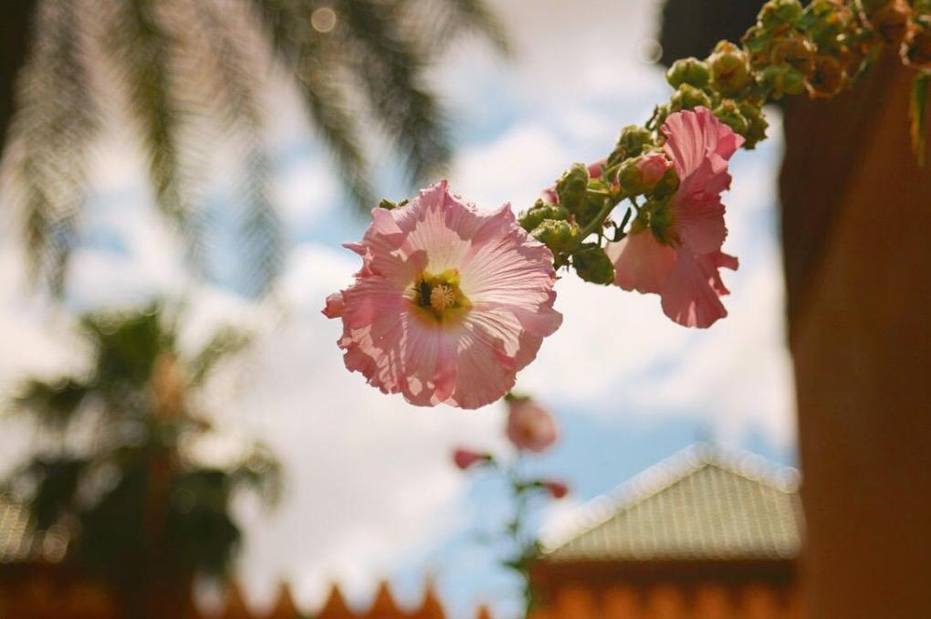 flowers morocco Marrakesh wandering