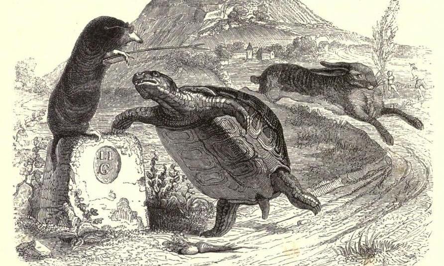 Grandville Tortoise