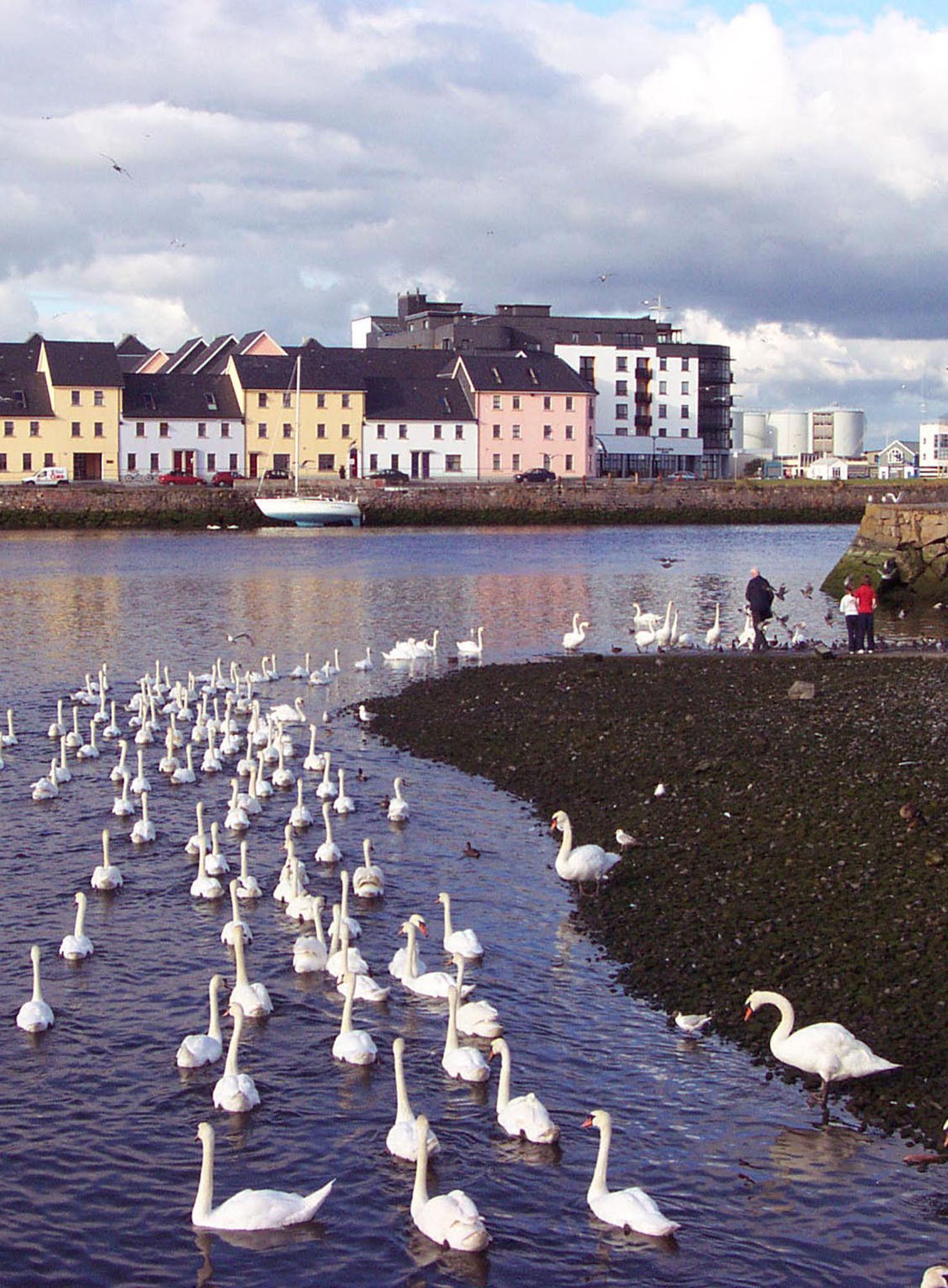 Donagh-CladdaghSwans