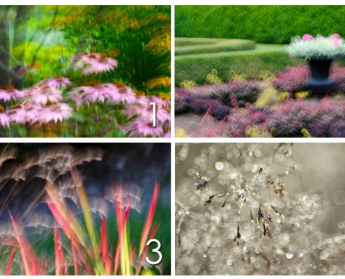 Pick from these 4 photos from the Blossoming Collection and find out what your intuition is saying to you