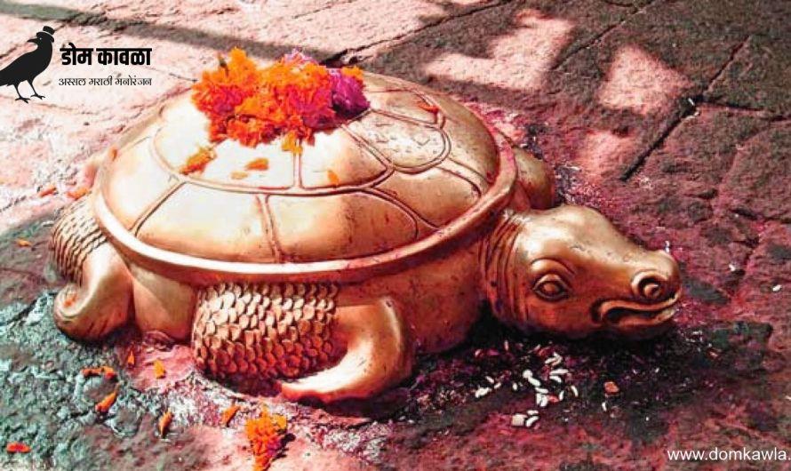 Tortoise in Temple प्रत्येक मंदिरा समोर कासव असण्याचे हे कारण आहे