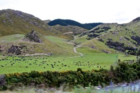 Christchurch-NewZealand-DomOnTheGo 9