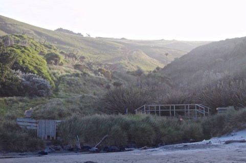 Dunedin-NewZealand-DomOnTheGo 127