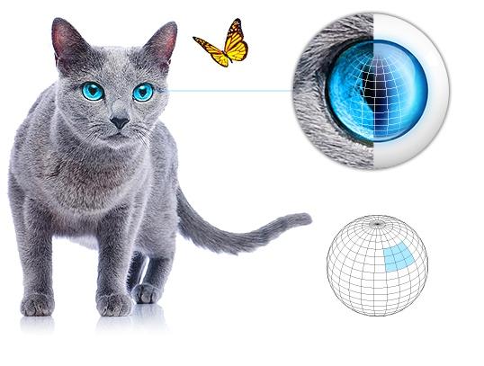Fibaro Motion Sensor, inspiré par la nature