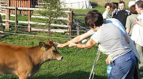 Dzieci stają się dorosłe. Farmy dla osób z autyzmem.